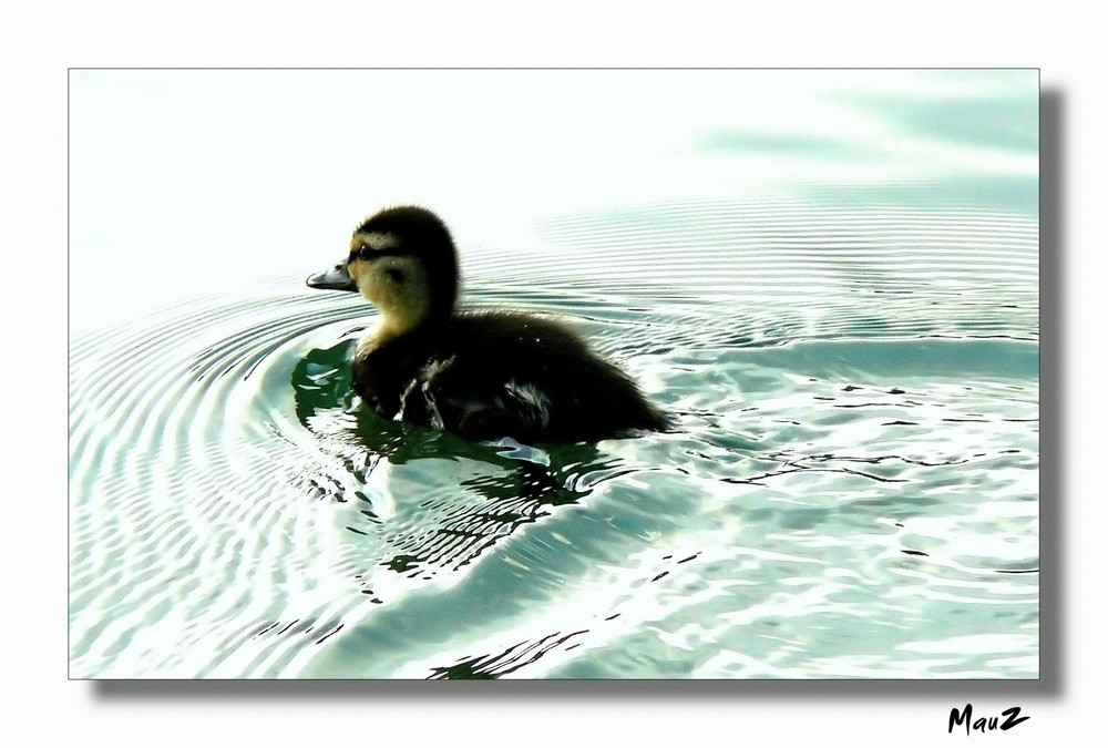 ... Quack Quack....