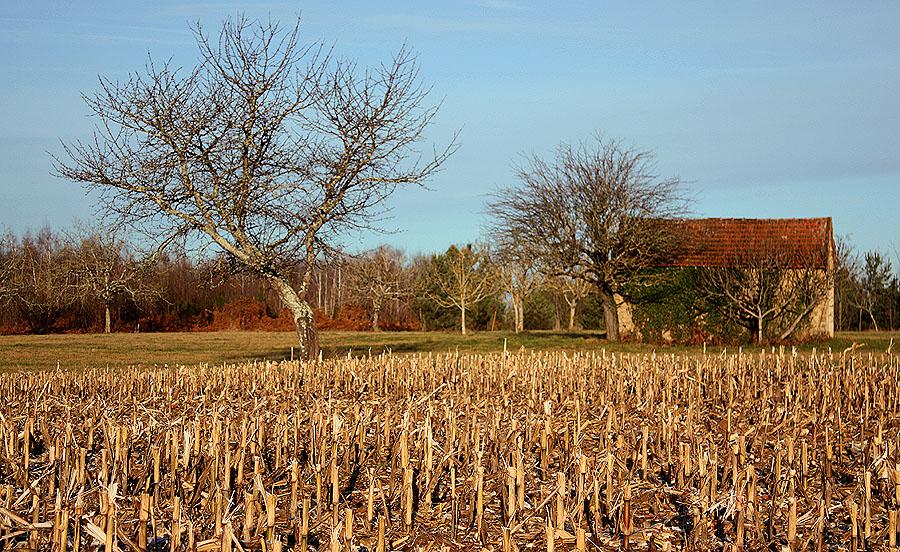 quadretto di campagna.....