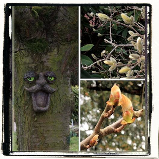 """"""" quand il bourgeonne, l'arbre rit """""""