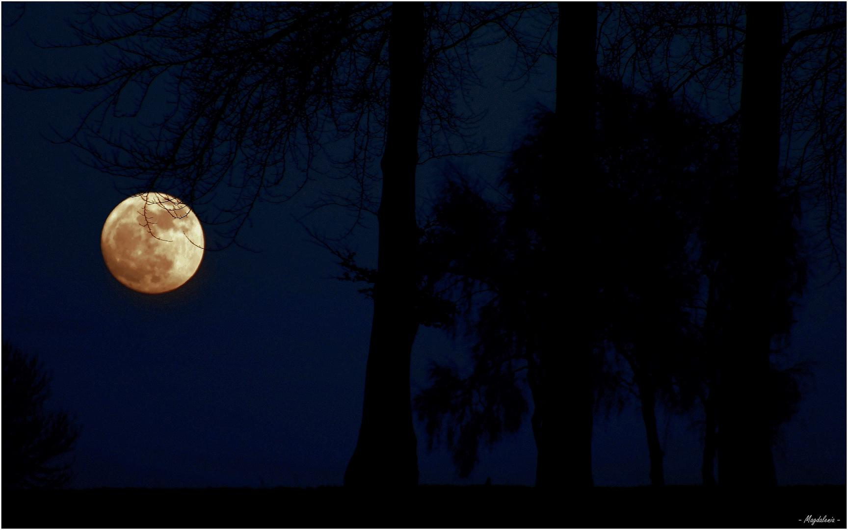 Quand la lune se met à danser .......