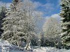 Quand la neige apparait