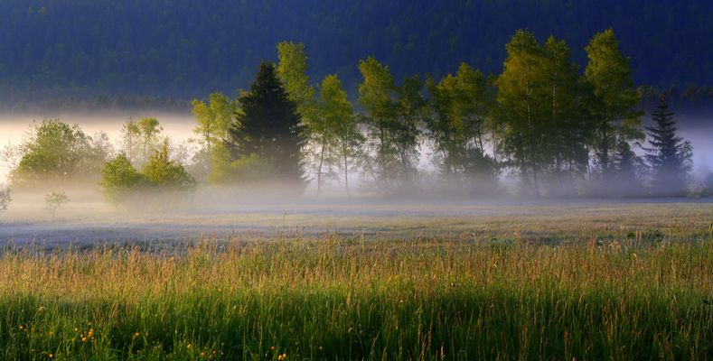 Quand l'aurore porte un regard sur la nature.