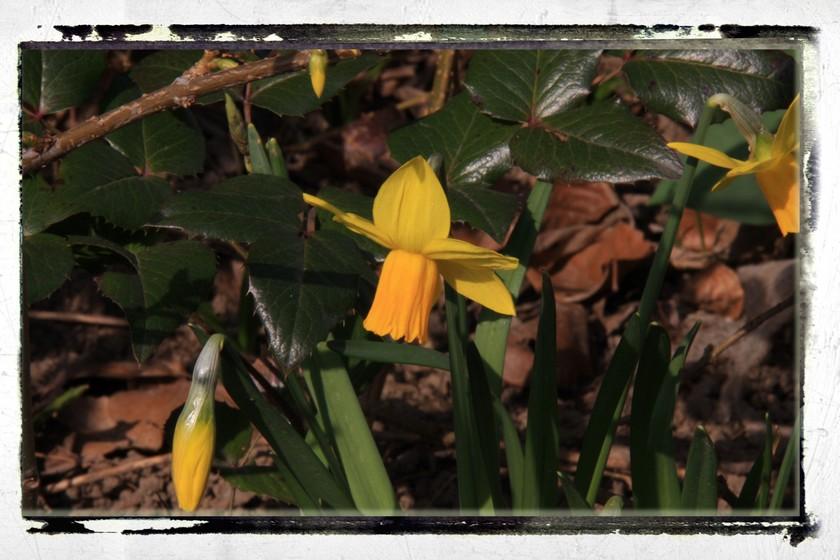 quand l'automne et le printemps se donnent la main!