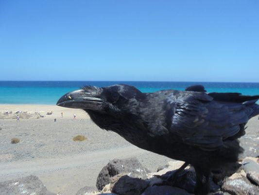 Quand le grand corbeau vient à notre rencontre