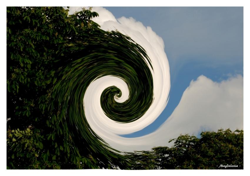 Quand le nuage valse avec l'arbre