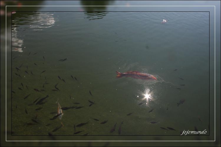 quand le soleil dit bonjour aux poissons
