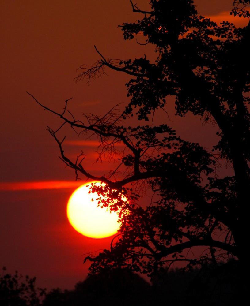 Quand le soleil se lève, du côté de chez moi, l'arbre mort prend vie...