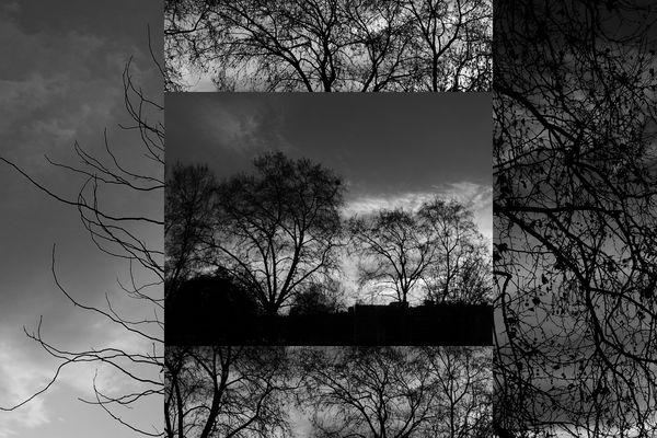 Quand les arbres dessinent