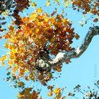 Quand les pensées s'accrochent aux arbres
