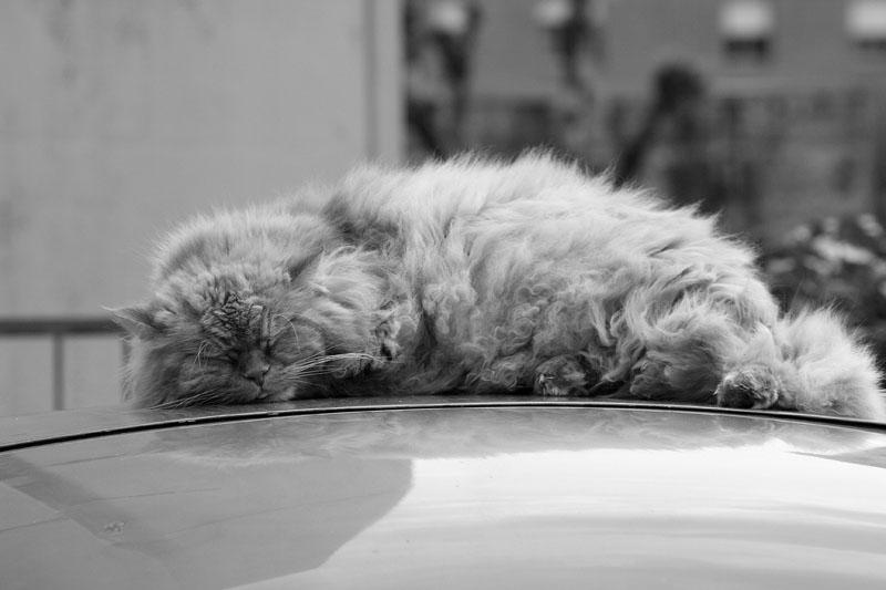 Quando c'è sonno........