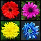 Quatuor floral