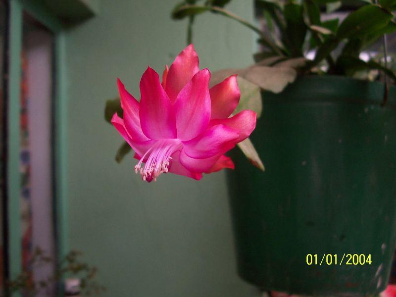 que flor