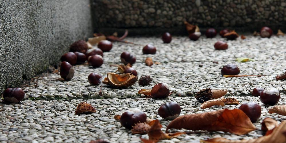 ...que l'automne soit ar...