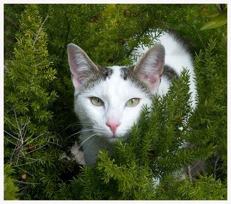 que ojos tienen los gatos!!
