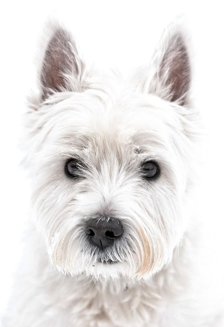 Queenie - Porträt