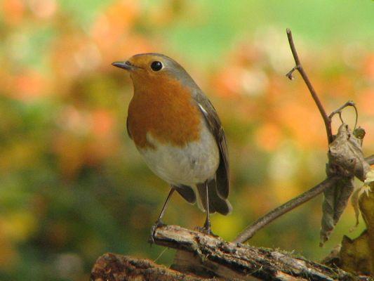 quel bel oiseau