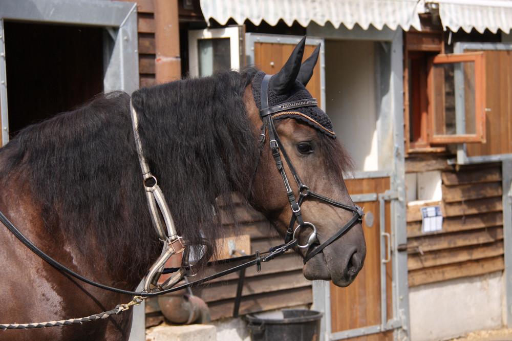 quel est le comble pour un cheval?