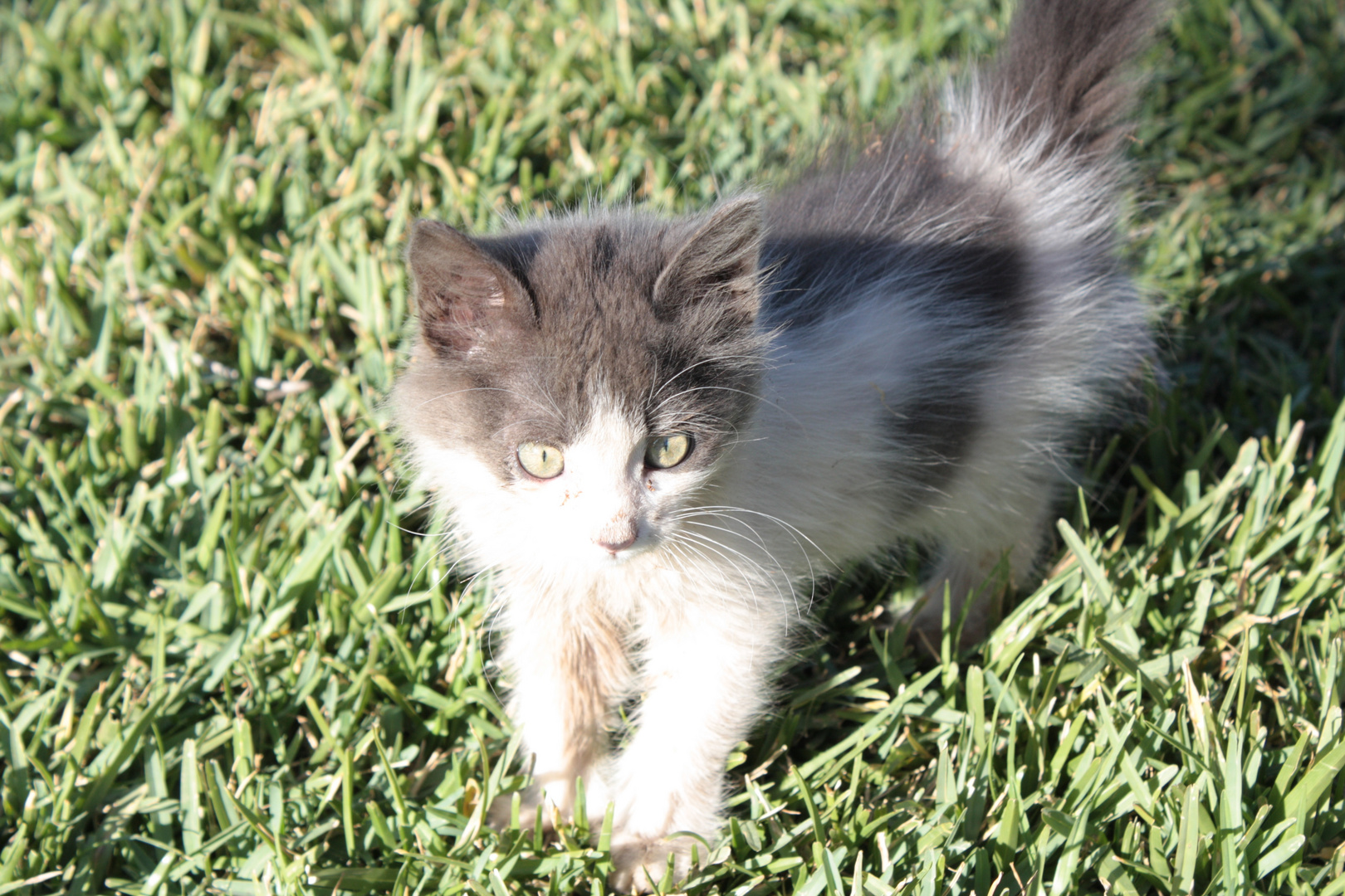 quel joli chaton!!!