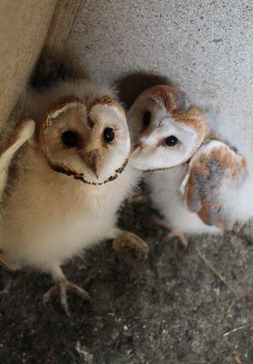 Qu'elles sont mignonnes!