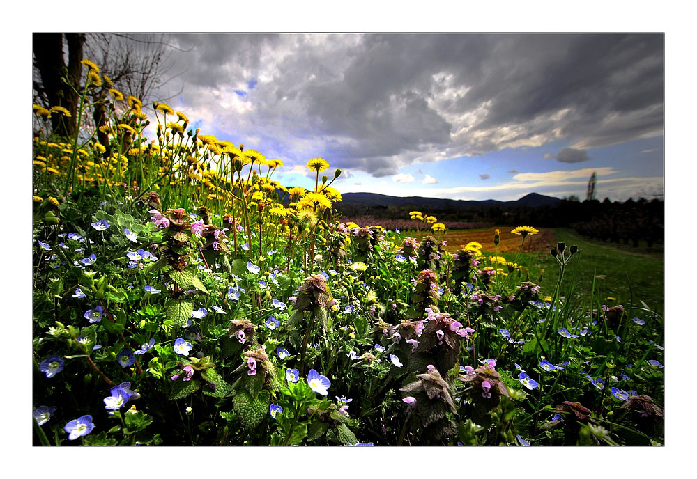 quelques fleurs de printemps