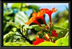 quelques fleurs pour un retour