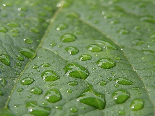 quelques gouttes de pluie...