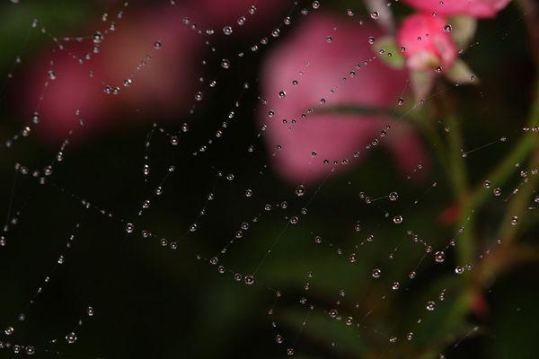 quelques gouttes de pluie sur une toile d'araignée