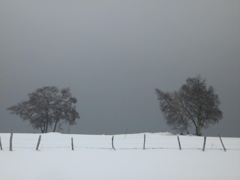 quelques part dans le blizzard