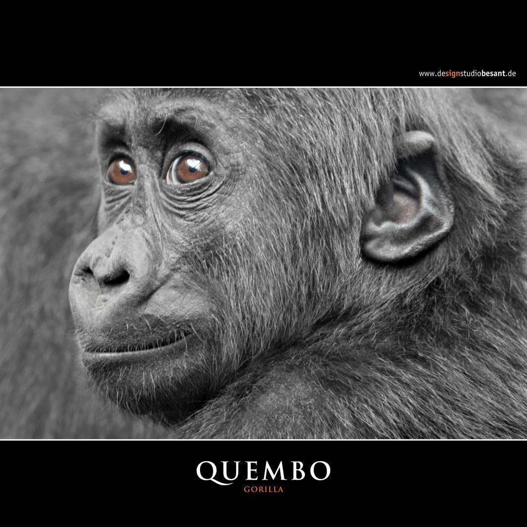 Quembo