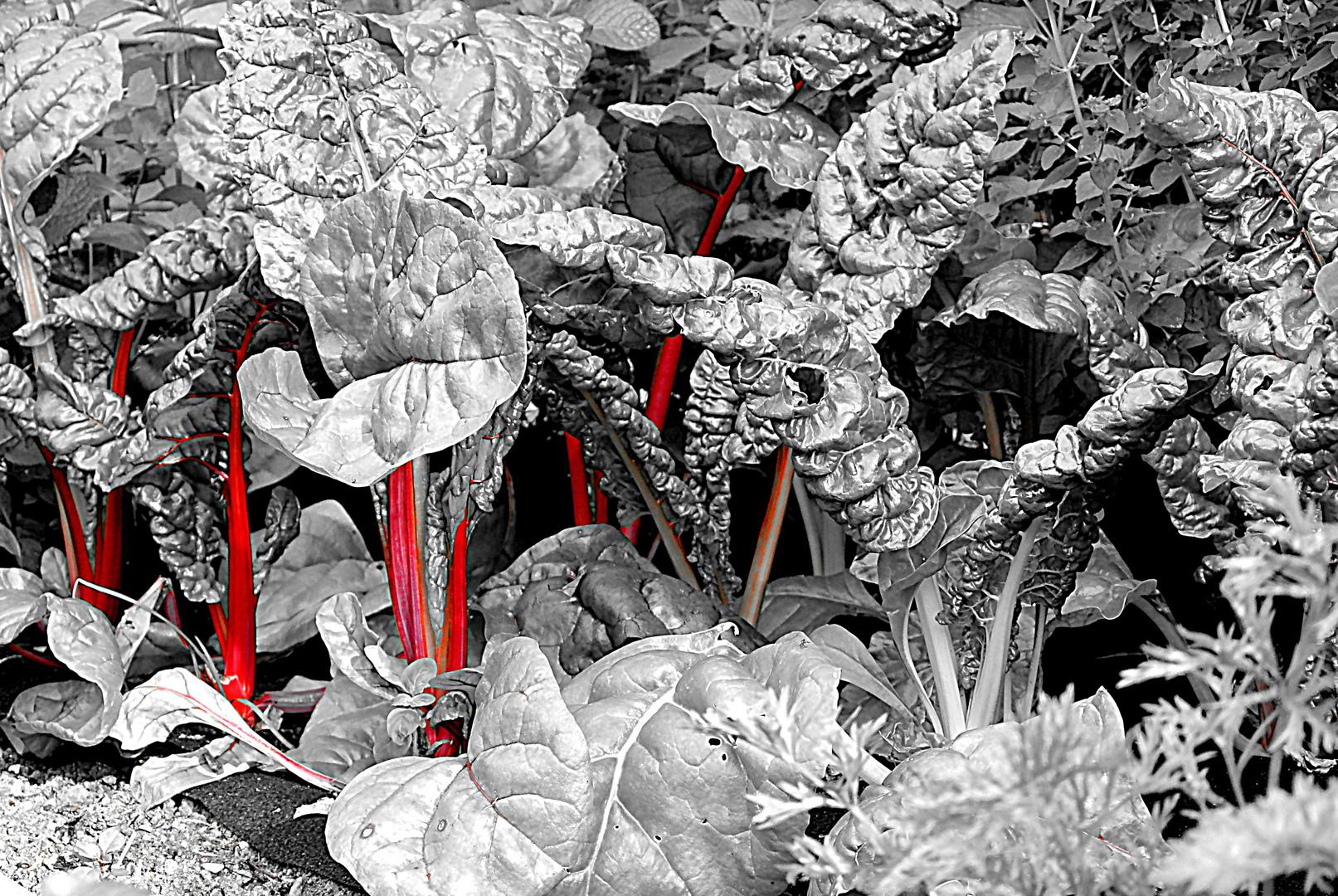 quer beet foto bild pflanzen pilze flechten natur bilder auf fotocommunity. Black Bedroom Furniture Sets. Home Design Ideas