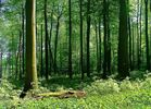 Quer durch den Wald