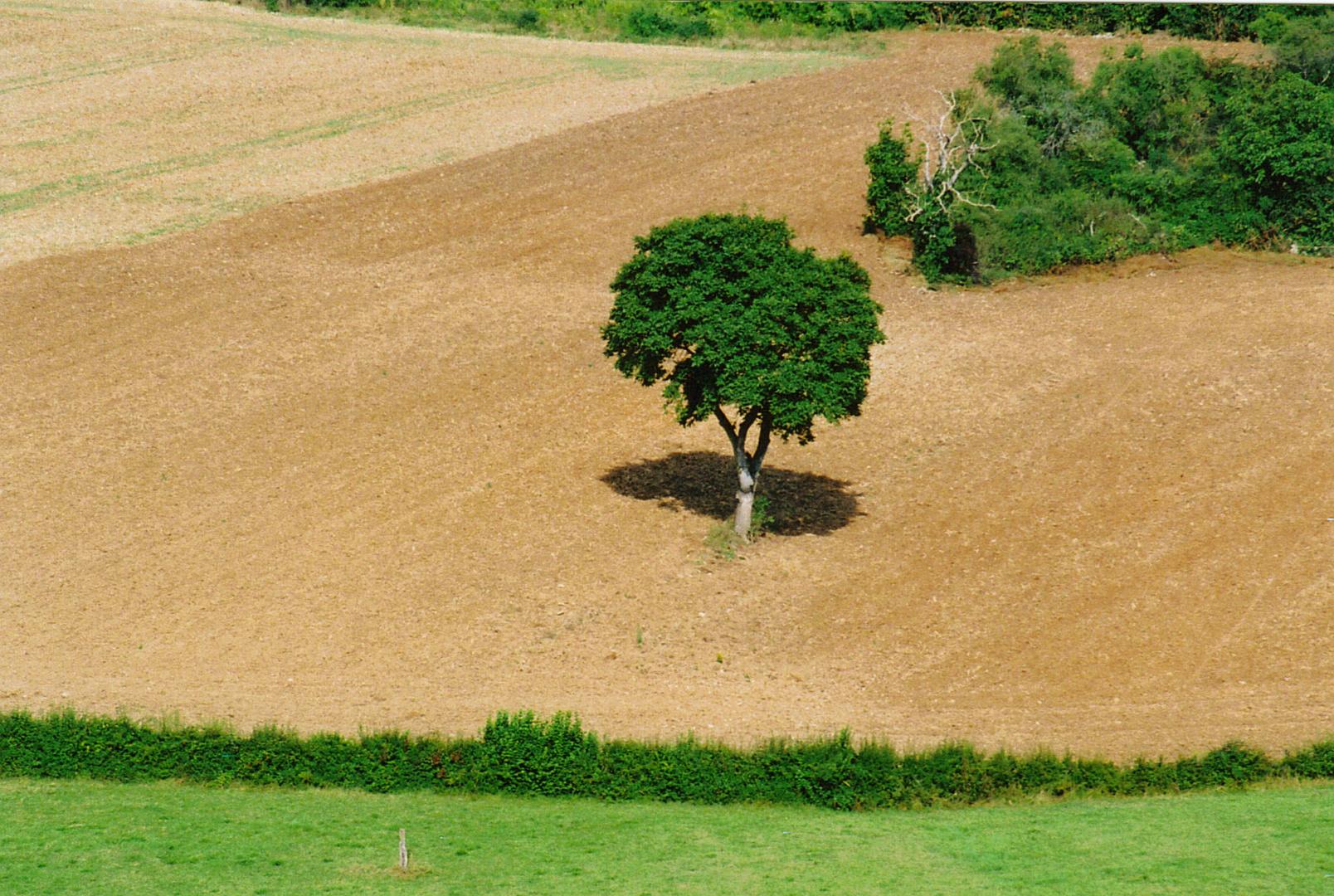 qu'est ce qu'un arbre?