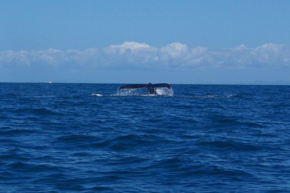 Queu de baleine 2
