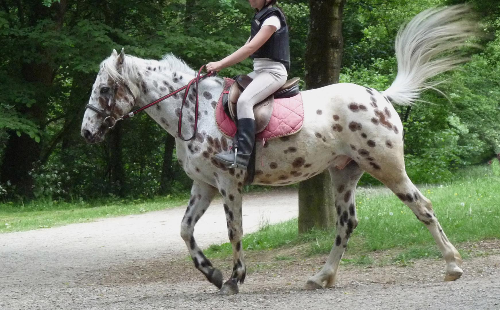 Queue de cheval.
