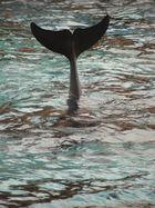 Queue de dauphin