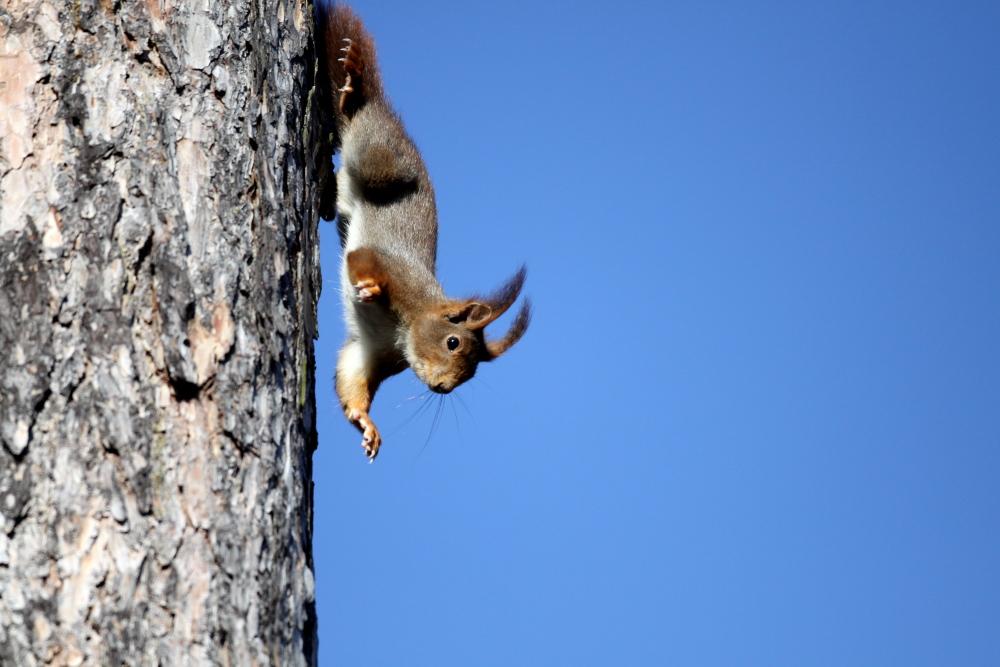 Qui de l'oiseau ou de l'écureuil ..........