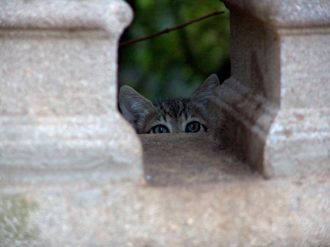 Quién anda ahí?