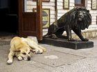 Quién teme al león?