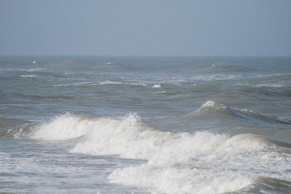 quiétude sur un lit de vagues