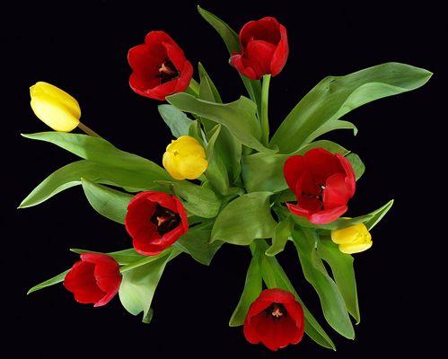 Quoi de mieux que des tulipes….