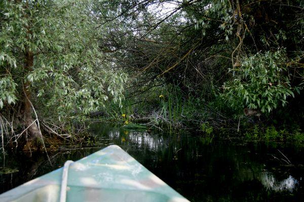 R 14 ... mit dem Motorboot im Donaudelta