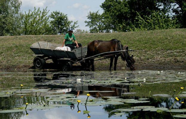 R 16 ... mit der Pferdekutsche im Donaudelta