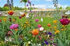 Rabattenblumen im Park vom Schloss Sanssouci