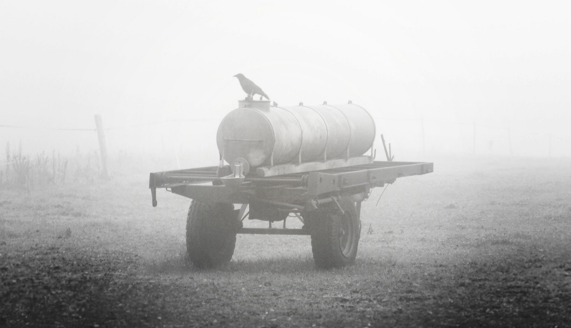 Rabe im Nebel