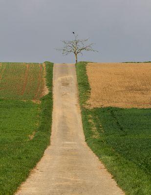 Rabenbaumweg