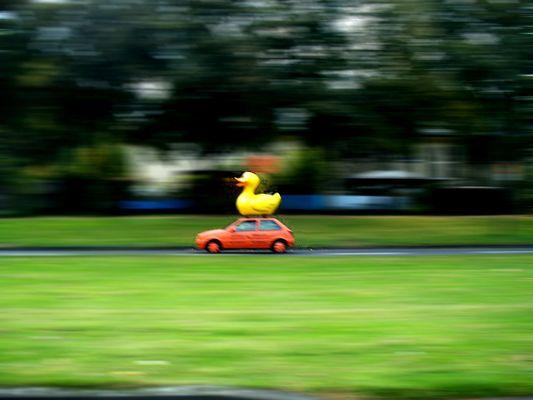 race duck