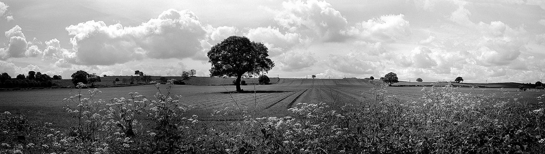 Racecourse Lane Farmers field