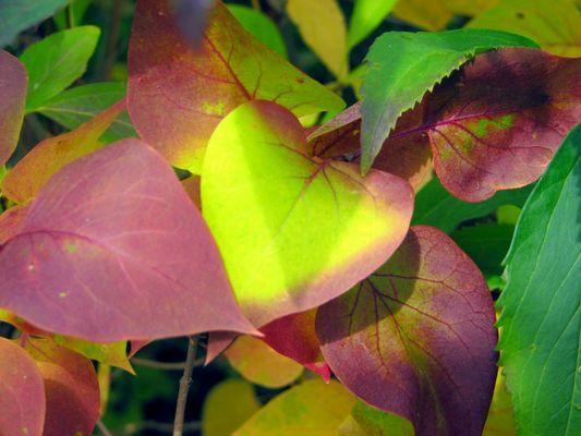 Racine d'arbre sous feuilles d'automne