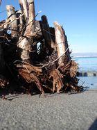Racines échouées sur la plage