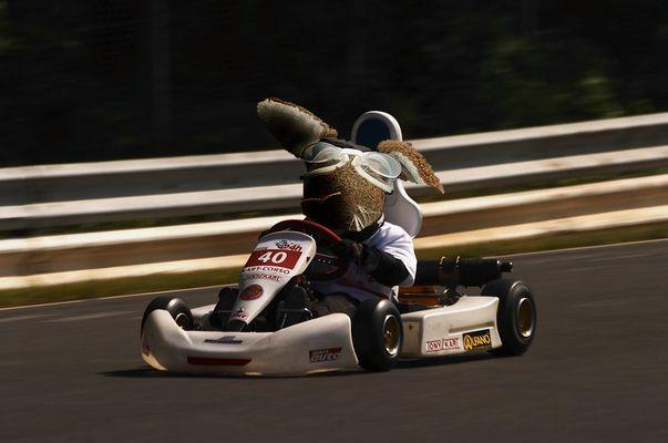 Racing Bunny